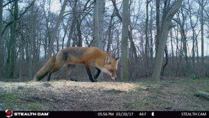 Wildcamera beelden